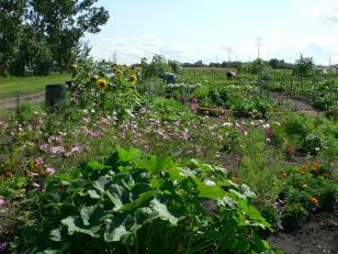 2012 Community Garden